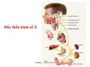 Chế độ ăn của người trào ngược dạ dày